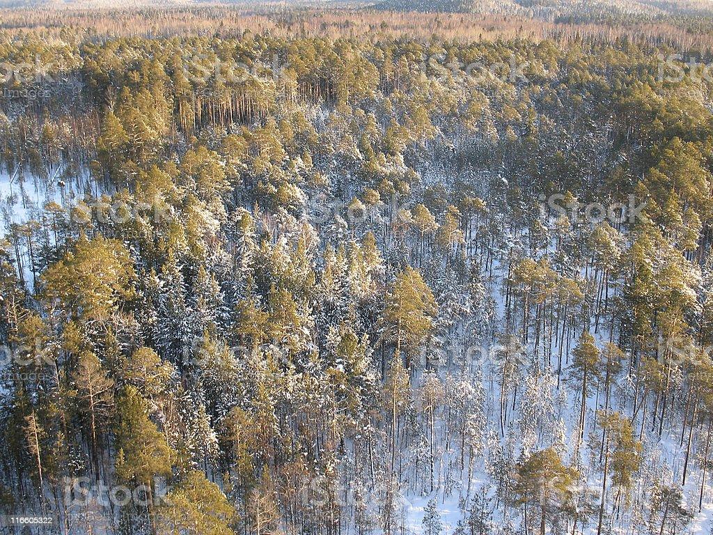 Aerial taiga 6 royalty-free stock photo