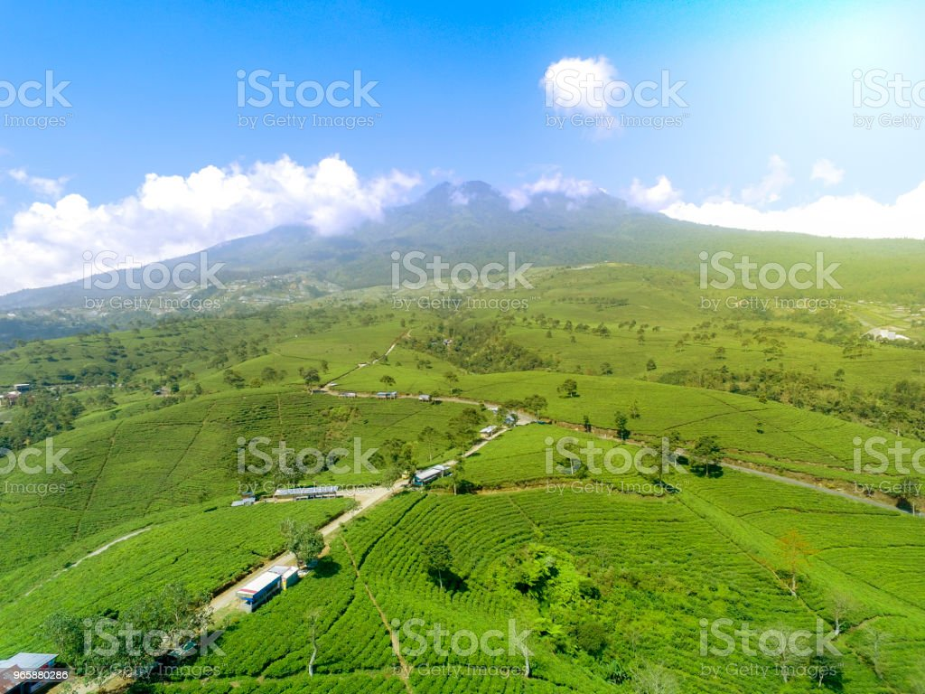 Aerial Tea field and Mountain - Royalty-free Aerial View Stock Photo