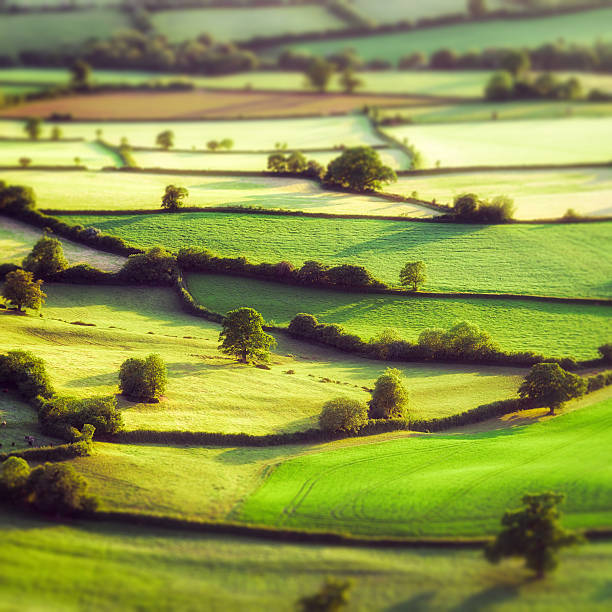 Aerial tilt-shift view of pastoral English fields Evening aerial view of summer fields divided by traditional hedges in Somerset, England.  Tilt-shift technique used. somerset england stock pictures, royalty-free photos & images