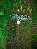 istock Aerial top down view of man working in vegetable garden 1254182237
