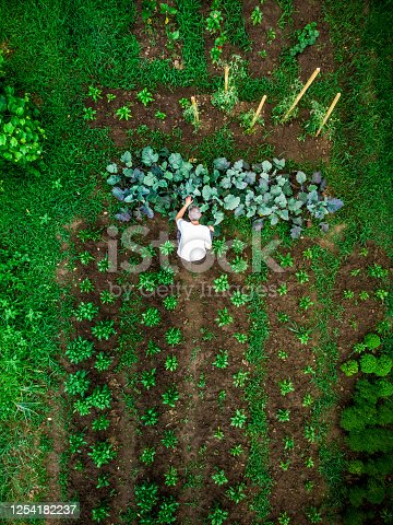 Drone shot depicting a top down aerial view of one man working outdoors in a vegetable garden. There are many different vegetable patches, creating abstract patterns and lines from above.