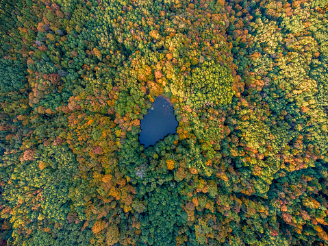 Aerial top view. Autumn  landscape. Wild forest lake.