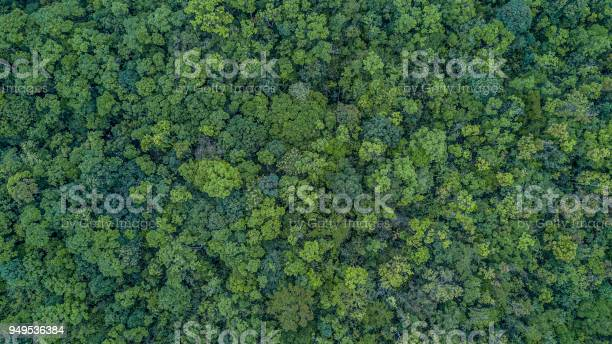 Photo of Aerial top view forest, Texture of forest view from above.
