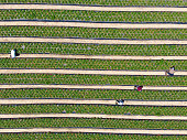 Aerial top view of green farmland and farmer working in the plantation, California