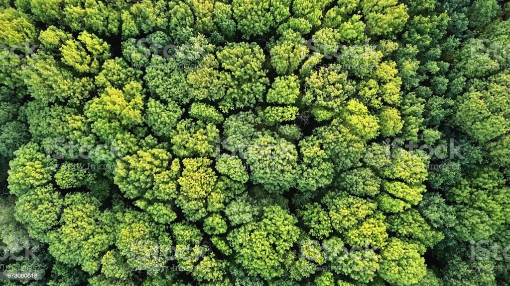 Aerial top view of green trees forest as natur background stock photo