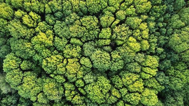 aerial top view of green trees forest as natur background - sustainable living stock pictures, royalty-free photos & images
