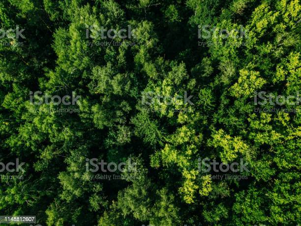 Photo of Aerial top view of green trees in the forest