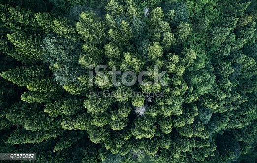 923623146 istock photo Aerial top view of spring in forest in rural 1162570357