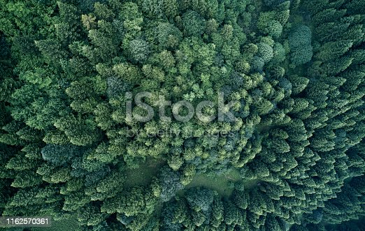 923623146 istock photo Aerial top view of spring in forest in rural 1162570361