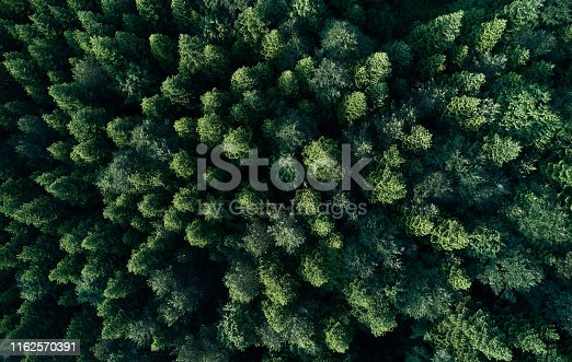 923623146 istock photo Aerial top view of spring in forest in rural 1162570391