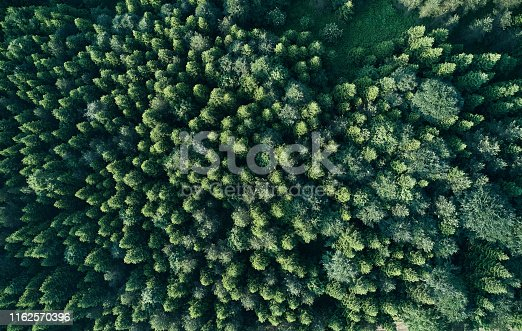 923623146 istock photo Aerial top view of spring in forest in rural 1162570396