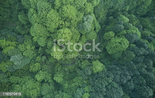 923623146 istock photo Aerial top view of spring in forest in rural 1162570415