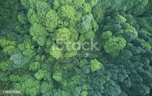 923623146 istock photo Aerial top view of spring in forest in rural 1162570432