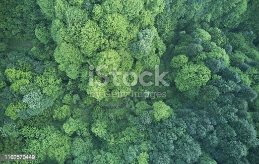 923623146 istock photo Aerial top view of spring in forest in rural 1162570449
