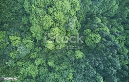 923623146 istock photo Aerial top view of spring in forest in rural 1162570460