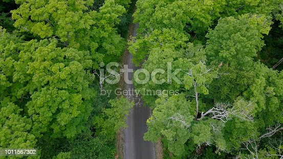 923623146 istock photo Aerial top view of summer green trees and road in forest in rural canada 1011567302