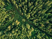 Aerial top view of summer green trees and road in forest in rural Finland. Drone photography