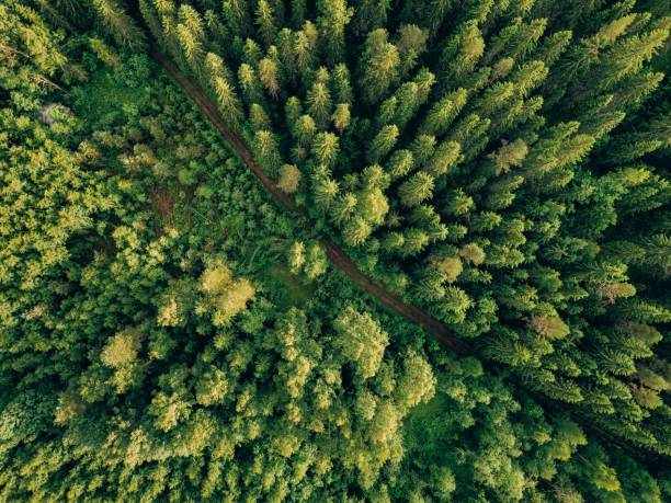 Aerial top view of summer green trees and road in forest in rural Finland. stock photo