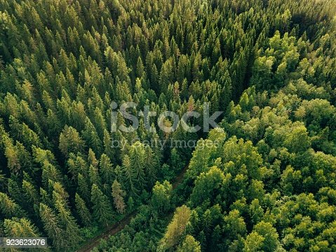 923623146 istock photo Aerial top view of summer green trees and road in forest in rural Finland. 923623076