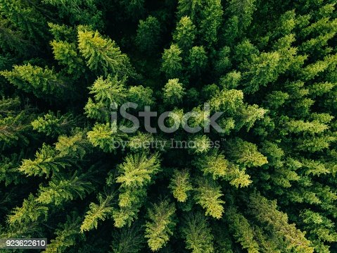 923623146 istock photo Aerial top view of summer green trees in forest in rural Finland. 923622610