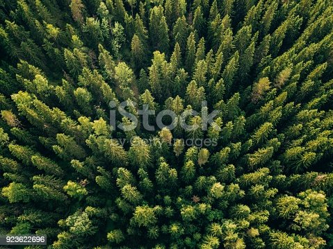 923623146 istock photo Aerial top view of summer green trees in forest in rural Finland. 923622696