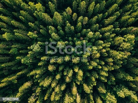 923623146 istock photo Aerial top view of summer green trees in forest in rural Finland. 923622948