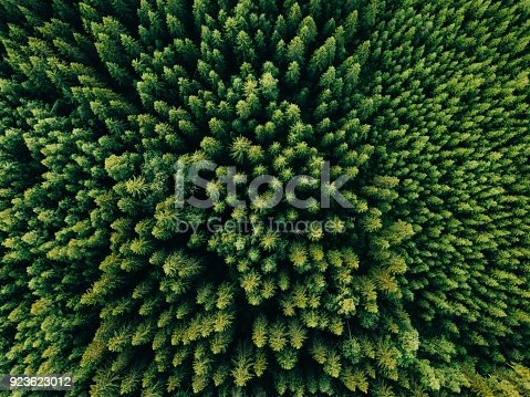 923623146 istock photo Aerial top view of summer green trees in forest in rural Finland. 923623012