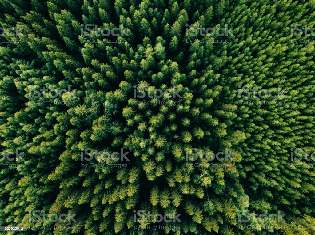 Aerial top view of summer green trees in forest in rural Finland. stock photo
