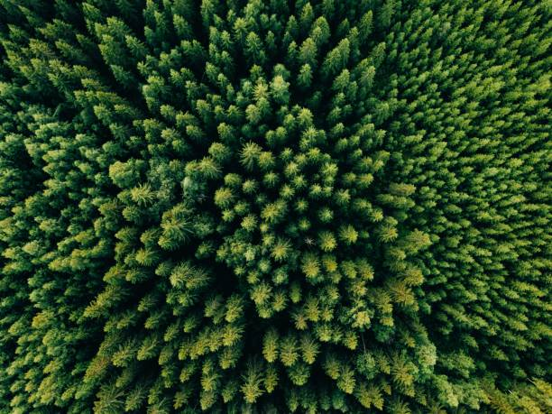 aerial top view of summer green trees in forest in rural finland. - forest stock pictures, royalty-free photos & images