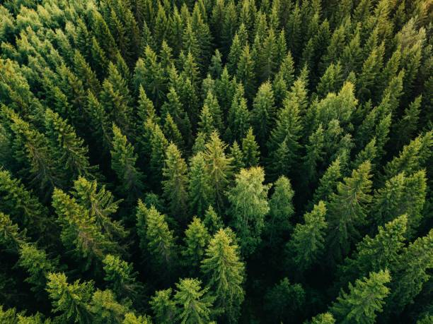 aerial top view of summer green trees in forest in rural finland. - trees stock photos and pictures