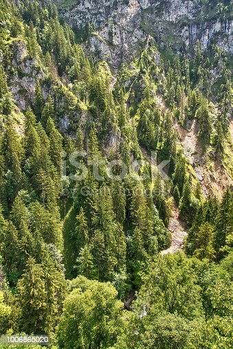 923623146 istock photo Aerial top view of summer green trees in forest 1006865020