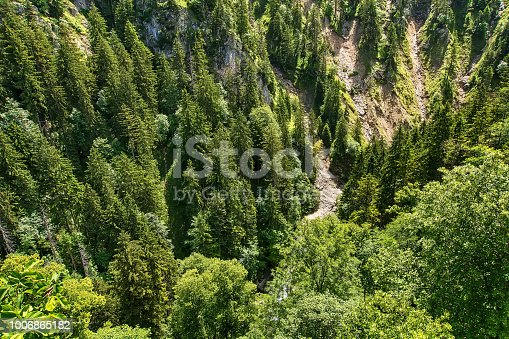 923623146 istock photo Aerial top view of summer green trees in forest 1006865182
