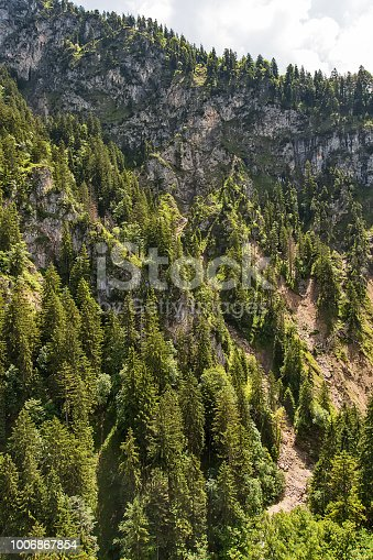 923623146 istock photo Aerial top view of summer green trees in forest 1006867854