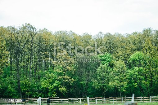 923623146 istock photo Aerial top view of summer green trees in forest 1145891369