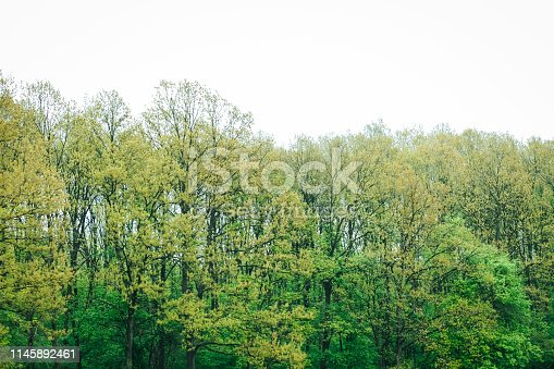 923623146 istock photo Aerial top view of summer green trees in forest 1145892461