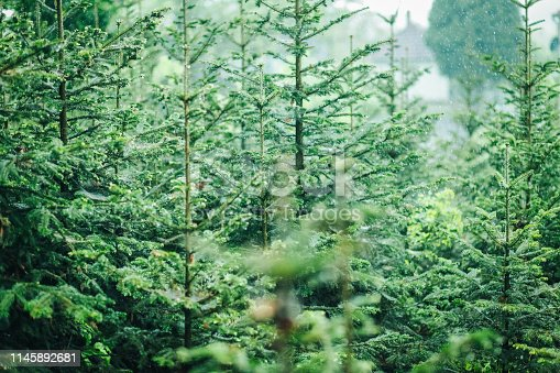 923623146 istock photo Aerial top view of summer green trees in forest 1145892681