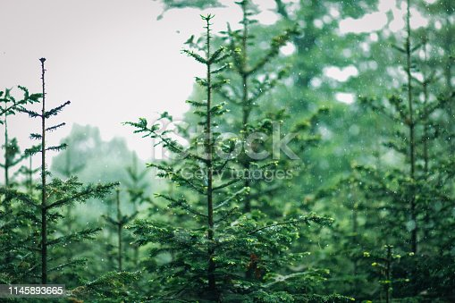923623146 istock photo Aerial top view of summer green trees in forest 1145893665