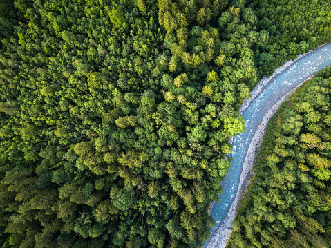 istock Aerial top view of summer green trees in forest with a splendid mountain river 1028772866