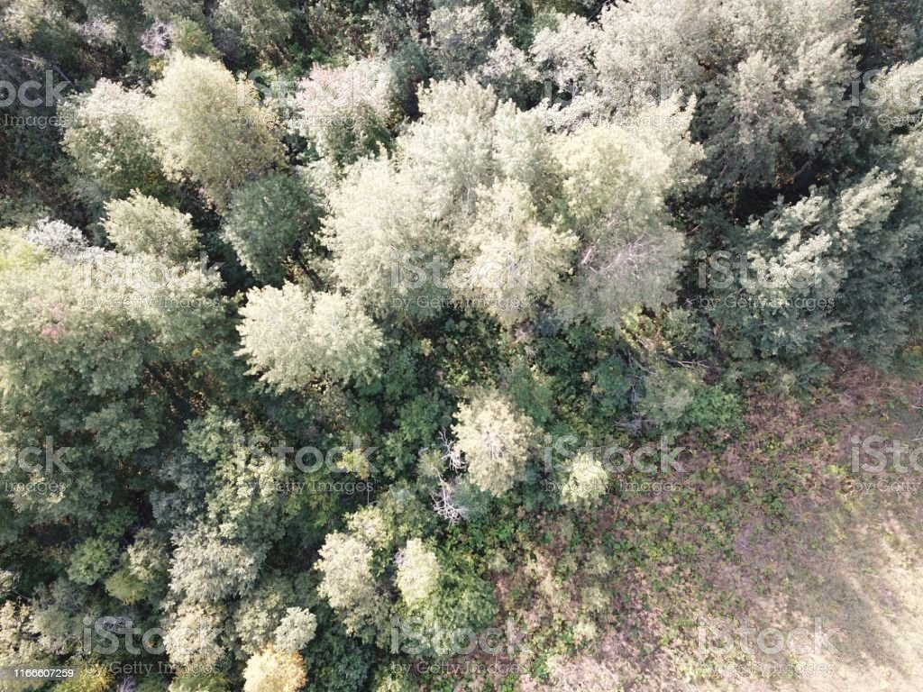 Aerial top view of the forest, texture of forest. Selective focus.