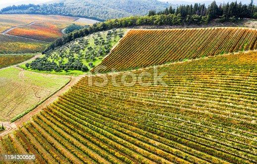 Aerial vie of vineyard in Chianti region, Tuscany, Italy