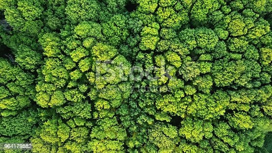 istock Aerial viev green forest on a spring day, natural background. Photo from the drone 964179882