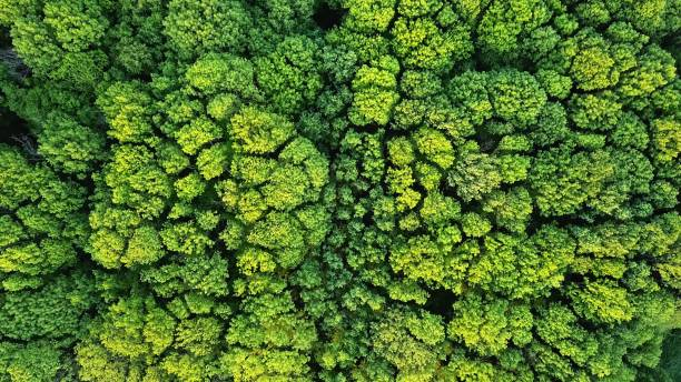 Aerial viev green forest on a spring day, natural background. Photo from the drone stock photo