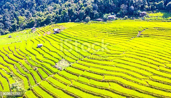 istock Aerial view amazing landscape rice terraces in a beautiful day Chiang Mai Thailand 903621232