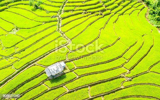 istock Aerial view amazing landscape rice terraces in a beautiful day Chiang Mai Thailand 903621240