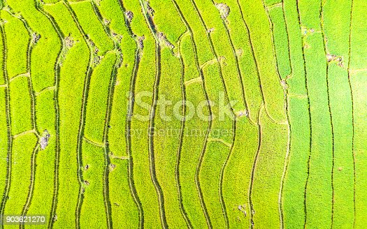 istock Aerial view amazing landscape rice terraces in a beautiful day Chiang Mai Thailand 903621270