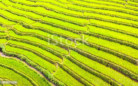 istock Aerial view amazing landscape rice terraces in a beautiful day Chiang Mai Thailand 903621306