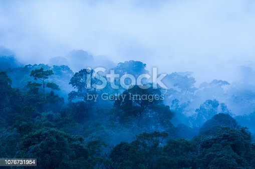 istock Aerial view, Ancient tropical forest in the mist, beautiful morning light. The art of shaping a forest in rainy season. Blue tone. Khao Yai National Park. UNESCO The World Heritage Site. Thailand. Copy space. 1076731954