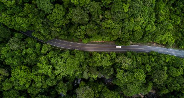 flygfoto asfaltväg och grön skog, skogsväg som går genom skogen med biläventyrsvy ovanifrån, ekosystem och ekologi hälsosamma miljökoncept och bakgrund. - väg bildbanksfoton och bilder