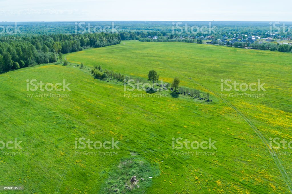 Aerial view at sunset on a green field with yellow mustard flowers and trees stock photo