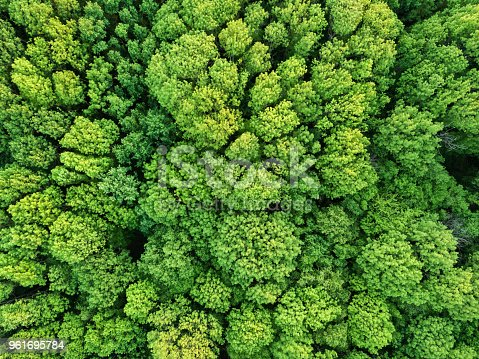Aerial view green deciduous forest in springtime. Photo from the drone
